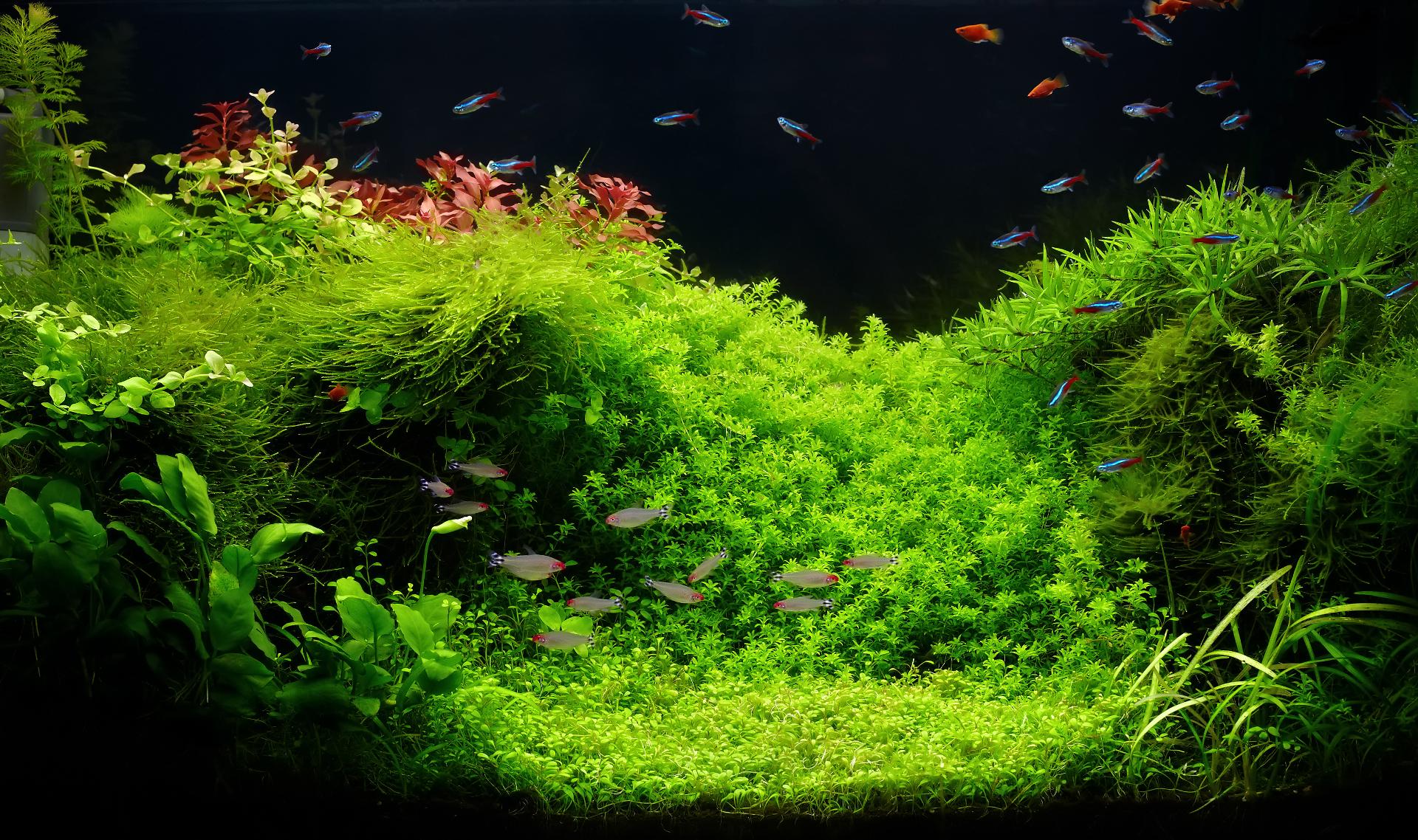 Aquatic Rescape